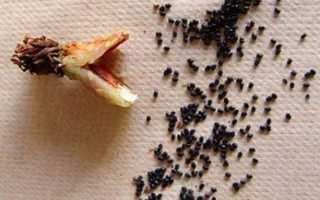 Секреты ухода за эхинокактусом в домашних условиях