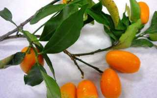 Сушеный лимон: польза и 4 лучших способа сушки