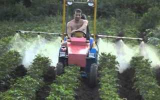 Фунгицид ридомил: применение для томатов, винограда, огурцов, картофеля, цветов, срок ожидания