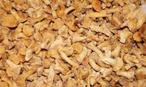 Рецепты приготовления как в домашних условиях солить лисички на зиму в банках