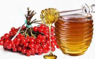 Уникальные лечебные рецепты калины с медом
